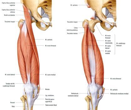 Rotura de fibras del recto anterior en futbolistas