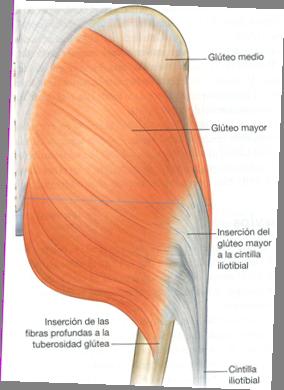 desgarro muscular gluteo tratamiento