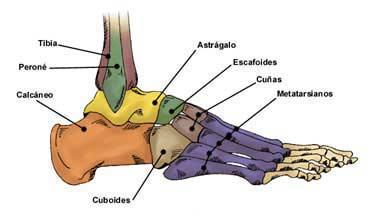 El ungüento para los pies al dolor en las venas