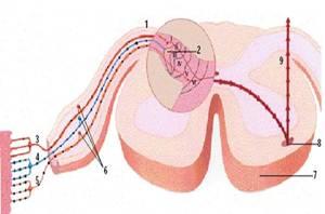 que es acido urico y sus sintomas niveles normales de acido urico en el embarazo manifestaciones del acido urico en la piel