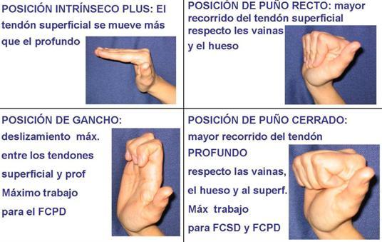 ejercicio mano dedo: