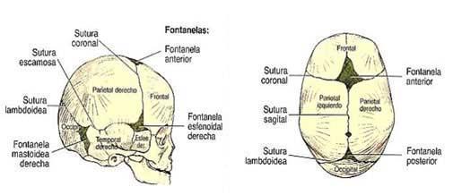 Prevención de la plagiocefalia posicional y su abordaje fisioterapéutico