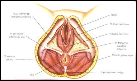 fisioterapia después de una cirugía de próstata