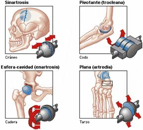 Conceptos de terapia manual ortopédica