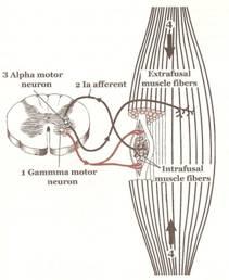 Efectividad del vendaje neuromuscular sobre el aparato locomotor