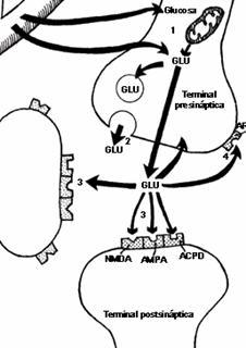 Modelos teóricos del dolor en la tendinopatía rotuliana o jumper's knee del deportista
