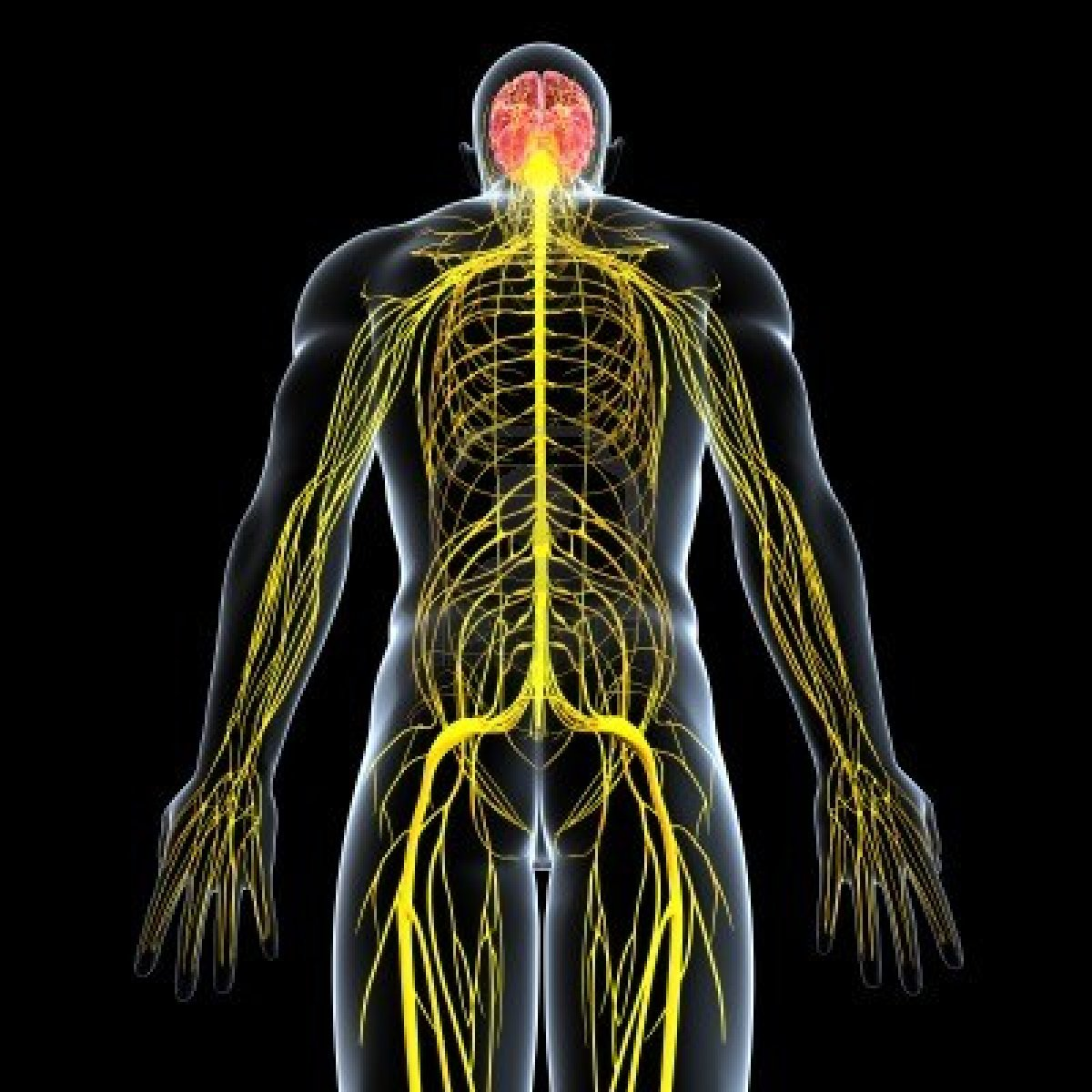 Dermo Neuro Modulación