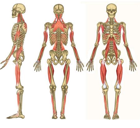 Cadenas musculares y articulares GDS.Valoración y Tratamiento