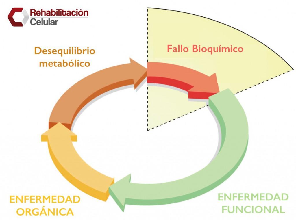 Formacion en Rehabilitacion Celular