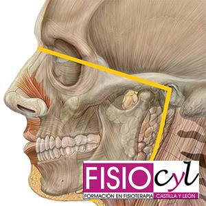 Curso de Región craneomandibular, cervical superior y control motor