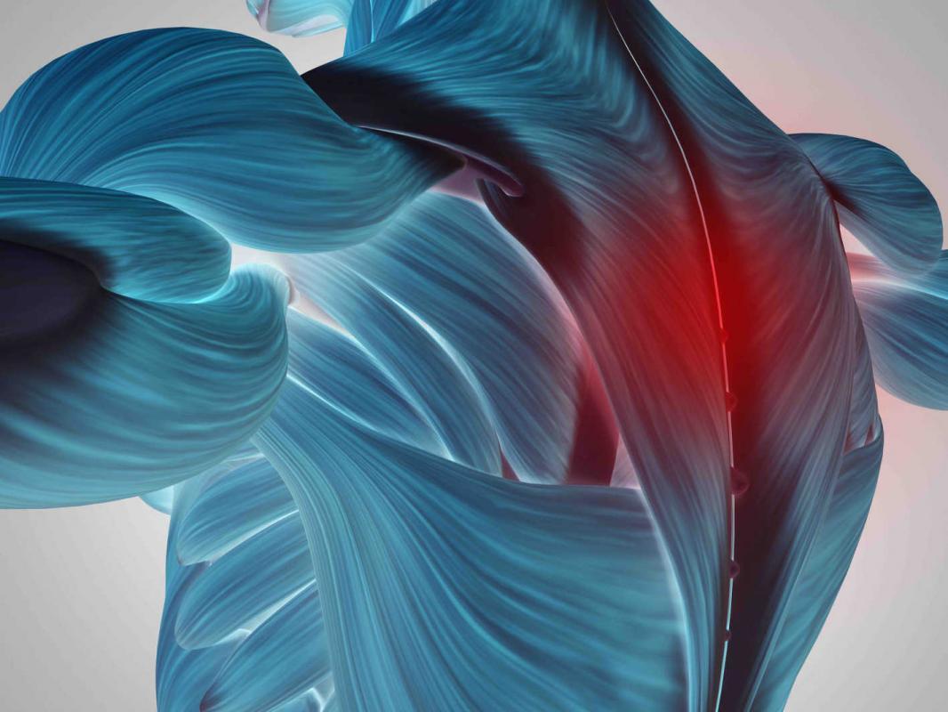 Fisioterapia en los  Trastornos Cérvico- braquiales y Escápulo- torácicos. Descuento del 40%