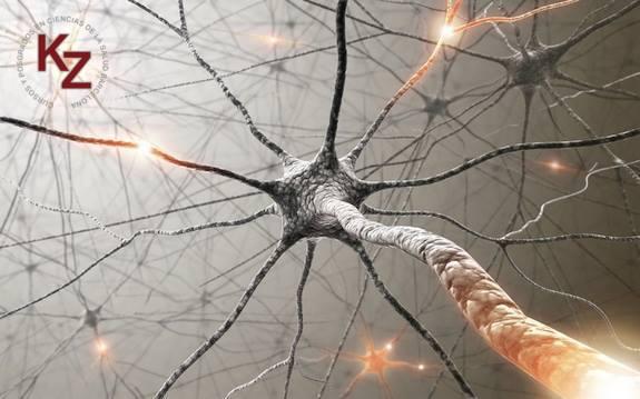 Dermo Neuro Modulación por Diane Jacobs, fisioterapeuta canadiense.