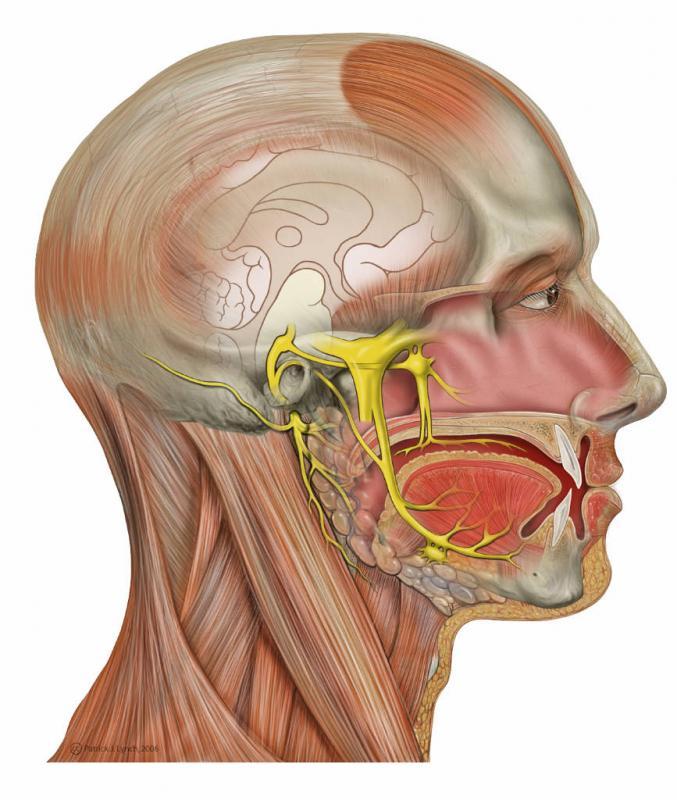 Tratamiento de la musculatura craneal