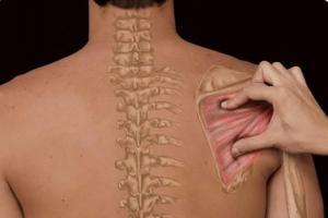 Curso Palpación y Diagnóstico Diferencial en Fisioterapia