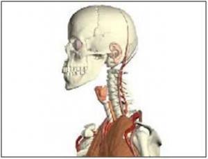 Estudio piloto en relación al efecto inmediato del deslizamiento dorsal C0 -C1 sobre la articulación temporomandibular en sujetos asintomáticos
