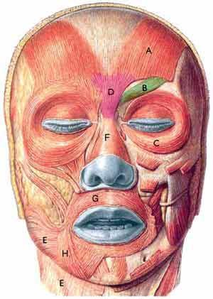 Fisioterapia de la parálisis facial.