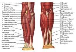 Fisioterapia avanzada en el tratamiento de la fractura supracondílea de húmero.-