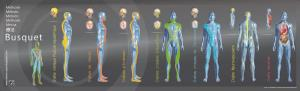 Método Busquet Las cadenas Fisiológicas