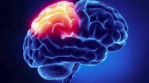 Intervención terapéutica neurológica en el paciente con daño cerebral adquirido