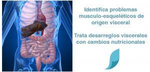 Curso de Disfunciones viscerales y su repercusión en las cadenas articulares-musculares