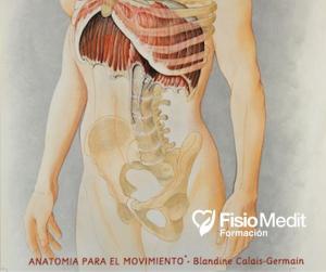 """""""Cinética respiratoria"""" – Anatomia para el movimiento®"""