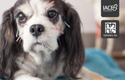 Acupuntura Canina: Medicina Tradicional China en el Perro