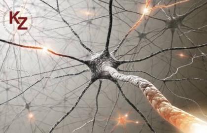 Dermo Neuro Modulación por Diane Jacobs