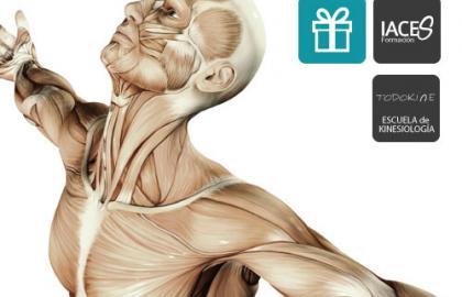 Kinesiología aplicada a la fisioterapia