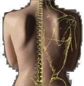 Centro de Fisioterapia Lumen: Terapia Manual Avanzada